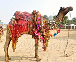 Jaipur Holiday Package